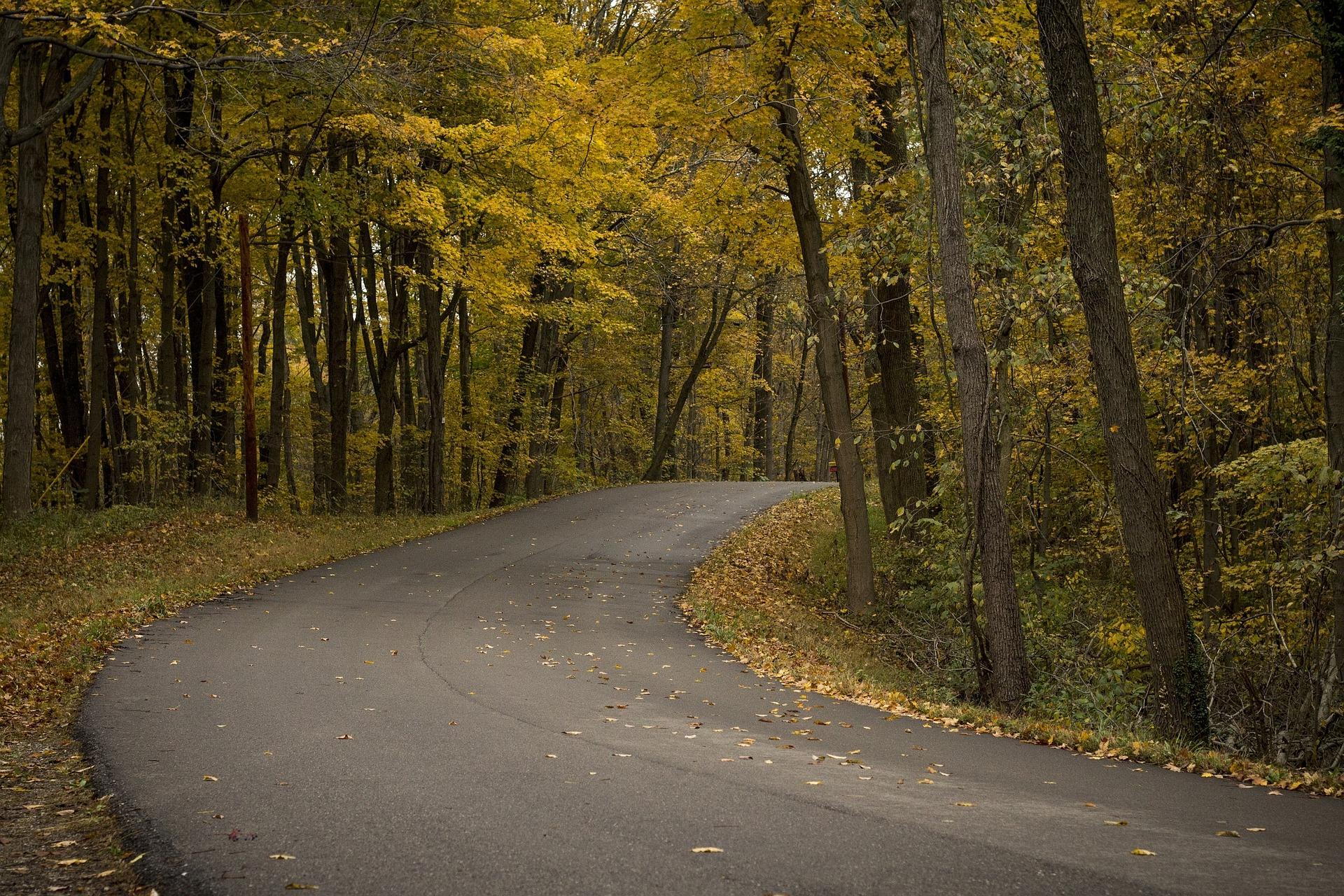 listje na cesti